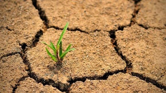 За 5 років близько 10% орних земель повністю деградують, - експерт фото, ілюстрація