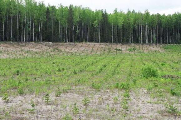 В Украине в 2017 году былы висажены 54 тыс гектаров леса фото, иллюстрация