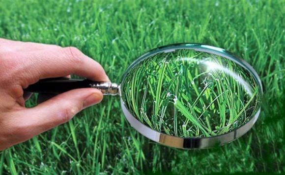 Агролайфхак: диагностика минерального питания растений в поле фото, иллюстрация