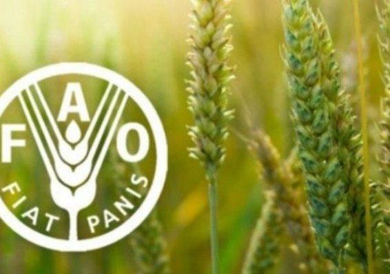 Доповідь ООН: розвиток сільського підприємництва - шлях подолання соціальної вразливості на сході України фото, ілюстрація