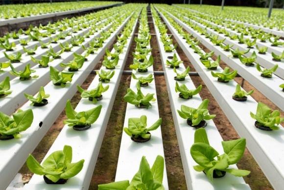 Аграрна технологічна революція врятує людство від голоду фото, ілюстрація