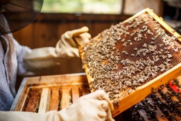 Продолжается прием документов на получение дотации за пчелосемьи  фото, иллюстрация