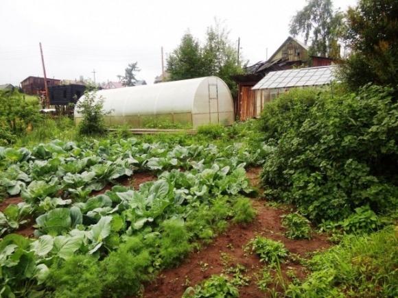 В Україні планують вперше провести сільськогосподарський перепис фото, ілюстрація