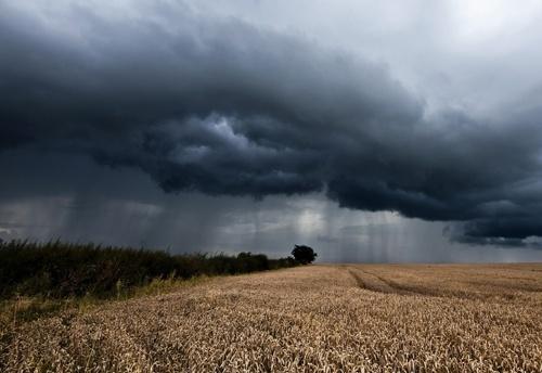 Погодні умови в Україні були задовільними для ярих зернових фото, ілюстрація