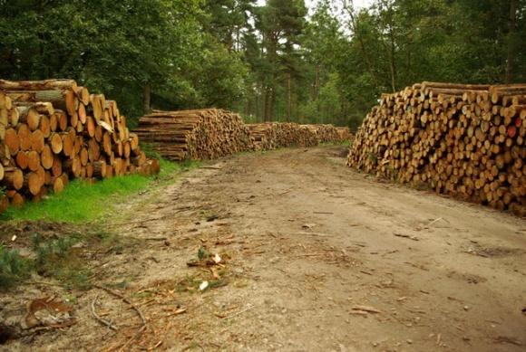 Держлісгоспи продаватимуть дрова за пільговою ціною фото, ілюстрація