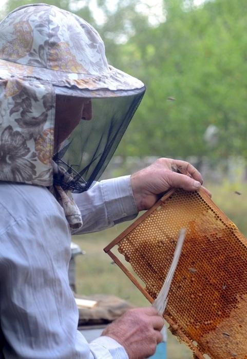 Для пчеловодов создан бизнес-калькулятор фото, иллюстрация