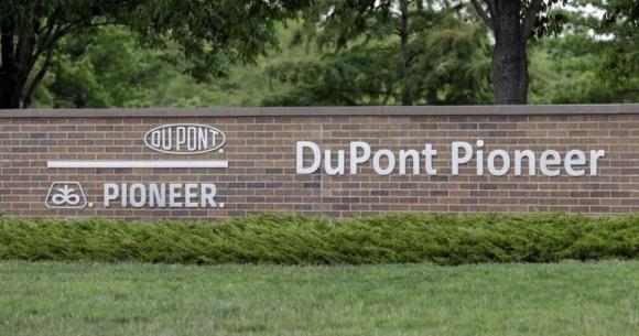 DuPont Pioneer виведе на ринок надсучасні гібриди кукурудзи фото, ілюстрація