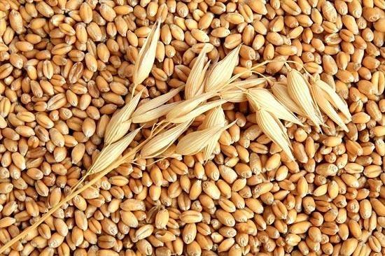 В Украине увеличатся площади под пшеницей дурум, - УкрАгроКонсалт фото, иллюстрация
