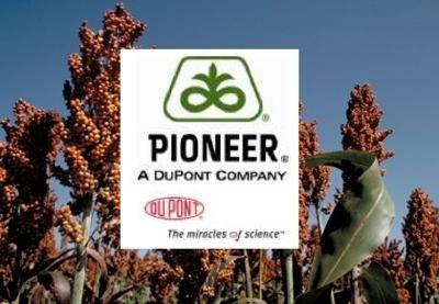 DuPont Pioneer будет выводить новые гибриды сорго вдвое быстрее фото, иллюстрация