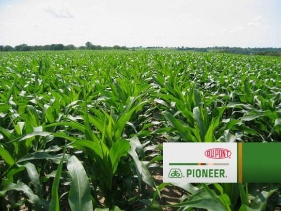 DuPont Pioneer наполягає: вирощене в Україні насіння не поступається імпортному фото, ілюстрація