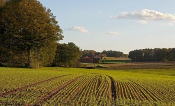 У запорізького фермера відберуть понад 40 гектарів землі фото, ілюстрація