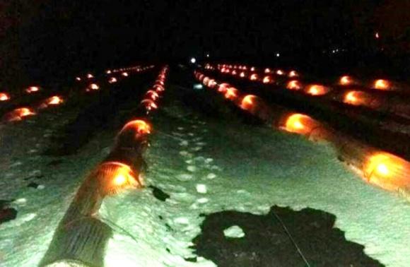 Аграрії за допомогою свічок врятували розсаду динь і кавунів фото, ілюстрація