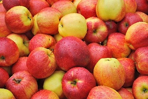 Українські яблука: імпорт зменшується, а модель експорту змінюється фото, ілюстрація