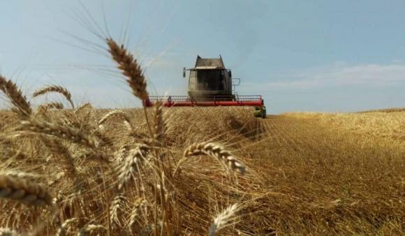 Аграрії Миколаївщини та Одещини зібрали по першому мільйону тонн ранніх зернових фото, ілюстрація