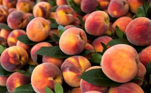 В Украине завершается сезон реализации персиков фото, иллюстрация