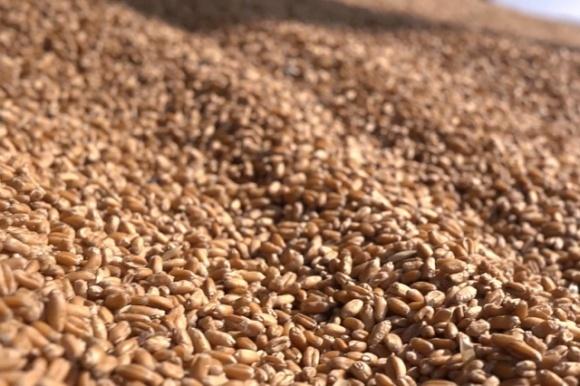 Минэкономики Украины определилось с предельным объемом экспорта пшеницы фото, иллюстрация