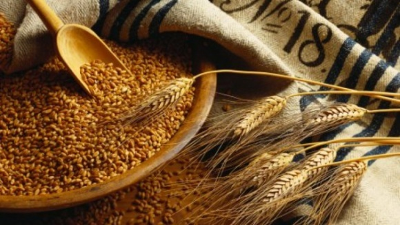 В апреле объемы экспорта зерновых из Украины сократились из-за кукурузы фото, иллюстрация