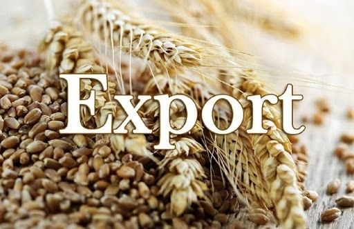 Темпы экспорта украинского зерна в начале текущего сезона уступают прошлогодним более чем в два раза фото, иллюстрация