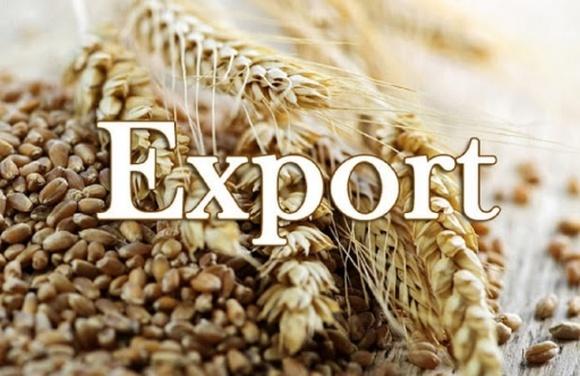 Украина вытесняет конкурентов в экспорте зерна в Египет фото, иллюстрация