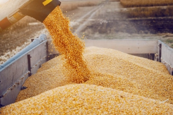 Правительство Украины упростило условия экспорта зерна фото, иллюстрация