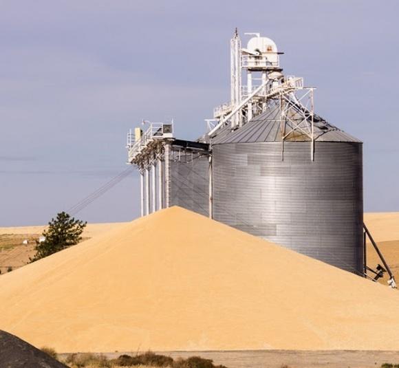 Как остановить кражи зерна на складах фото, иллюстрация