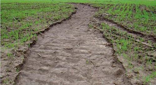 FAO будет бороться с деградацией почв в Украине фото, иллюстрация