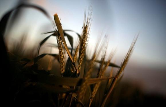 Превращение Украины в аграрную страну сделало ее сырьвым придатком мира, - эксперт фото, иллюстрация