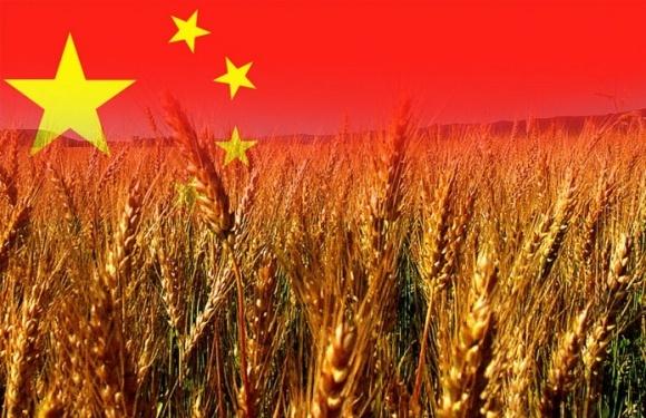 ДПЗКУ домовилася про збільшення поставок зерна до Китаю фото, ілюстрація