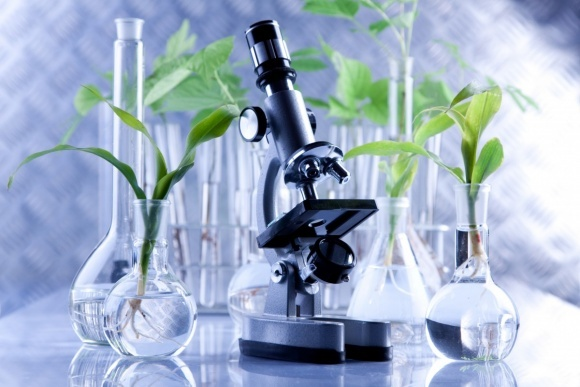 Госпродпотребслужба рассказала о фитосанитарном состоянии растений фото, иллюстрация