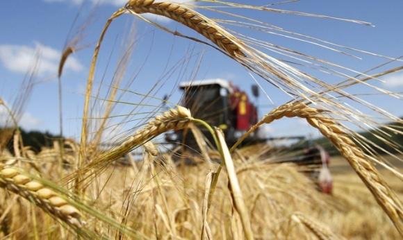 Урожай ранніх зернових перевищив 34 мільйони тонн, - Мінагрополітики фото, ілюстрація