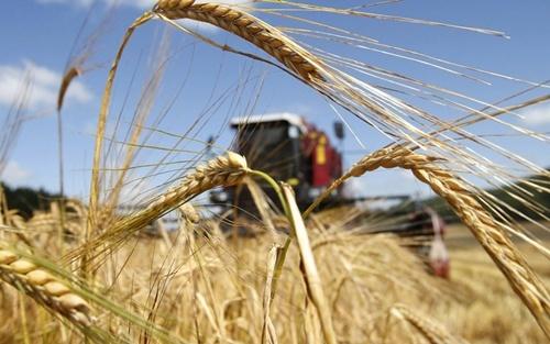Врожай зернових 2019 року: перші прогнози фото, ілюстрація