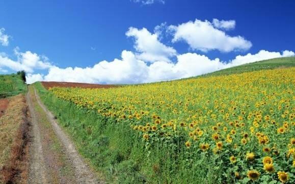 72 агропідприємства Полтавщини отримали компенсацію вартості вітчизняної сільгосптехніки фото, ілюстрація