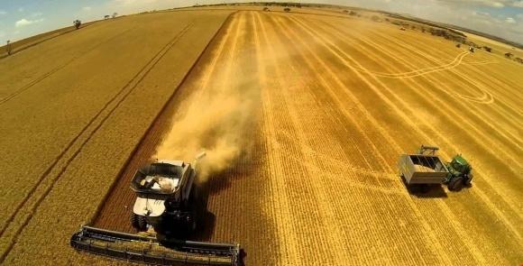 Жнива-2018: аграрії вже зібрали 3,5 млн тонн ранніх зернових фото, ілюстрація