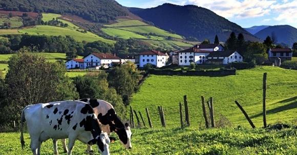 Івано-Франківщина за рік не дорахувалась 32-х ферм фото, ілюстрація