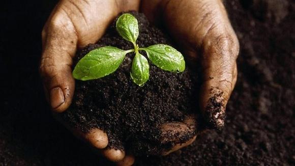 Агробизнесу не хватает профессиональных управленцев фото, иллюстрация