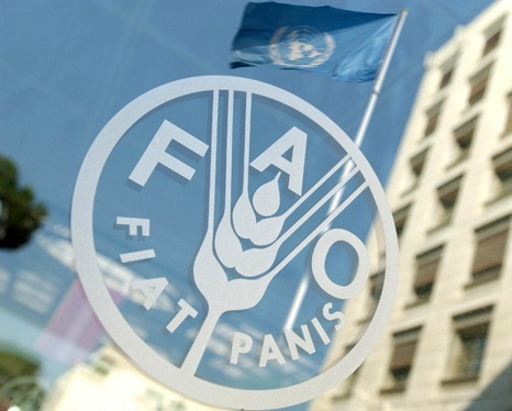 FAO радить українським виробникам молочки розвивати збут фото, ілюстрація