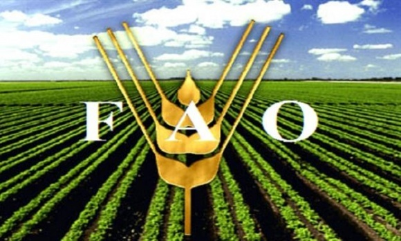 FAO помогает семенами домохозяйствам в зоне проведения АТО фото, иллюстрация