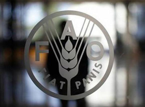 Міжнародні ціни на зернові культури надалі зростали у лютому – ФАО фото, ілюстрація
