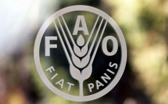 Індекс світових продовольчих цін FAO практично не змінився за квітень фото, ілюстрація