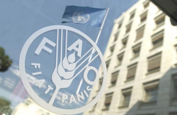 В Україні стартував проект FAO щодо протидії незаконному обігу хімречовин фото, ілюстрація