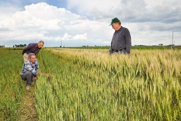Спецрежим для аграріїв: Комітет – за, МВФ - проти фото, ілюстрація