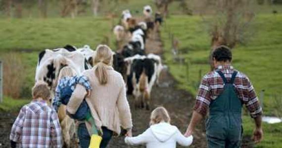 На Полтавщині дві сімейні ферми отримали 900 тис. грн на розвиток ВРХ фото, ілюстрація