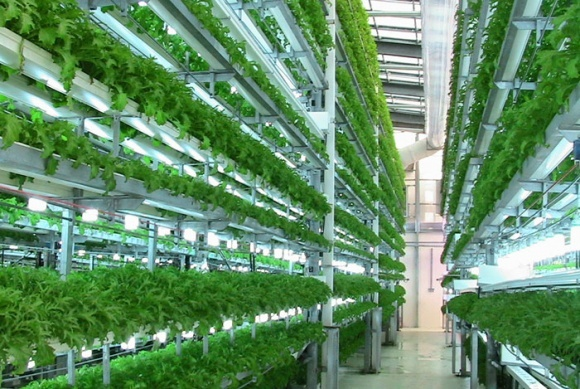 В Нидерландах строят крупнейшую в Европе вертикальную ферму фото, иллюстрация