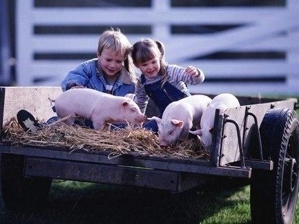 Полтавські сімейні ферми отримають понад 28 млн грн допомоги фото, ілюстрація