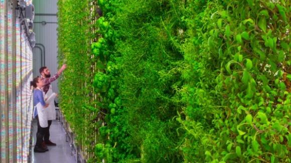 Стартап Plenty планирует открыть 500 вертикальных ферм по всему миру фото, иллюстрация