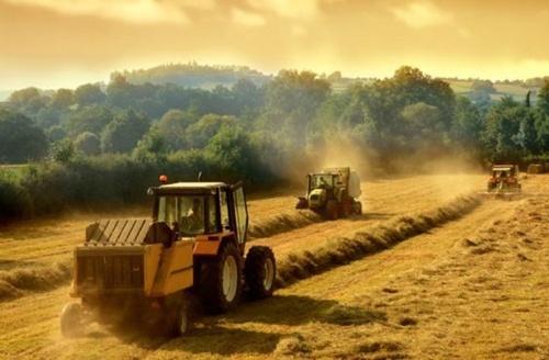 У липні 1.3 тис. фермерських господарств України отримають 63 млн грн держкомпенсації фото, ілюстрація