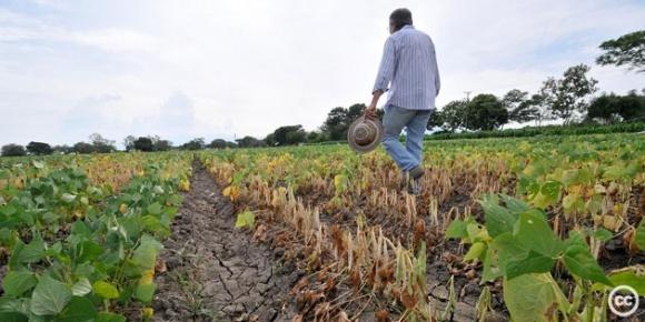 4 способа уничтожения фермеров фото, иллюстрация