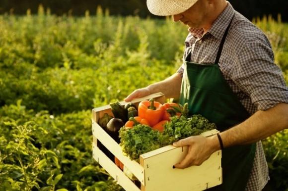 Фермеры могут потерять свой бизнес за сезон фото, иллюстрация