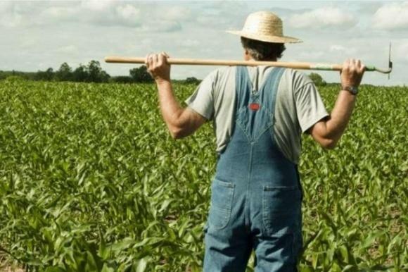 Фермери розповіли, чи буде цьогоріч Україна із хлібом та олією через перепади погоди фото, ілюстрація