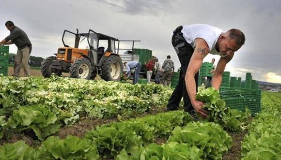 Українські компанії можуть отримати грант на розробку маркетингових стратегій зростання аграрних малих та середніх підприємств фото, ілюстрація